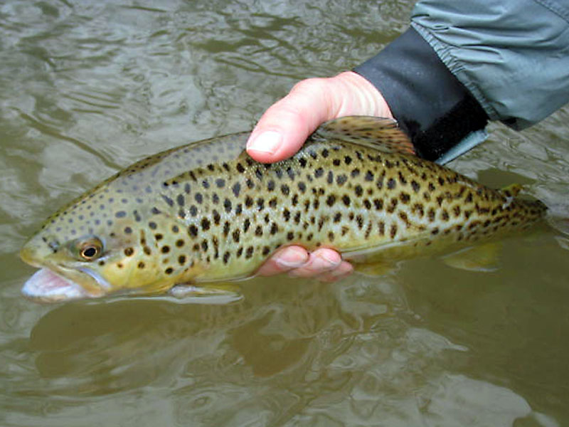 Fly fishing the famous spruce creek in pennsylvania for Fishing in pennsylvania