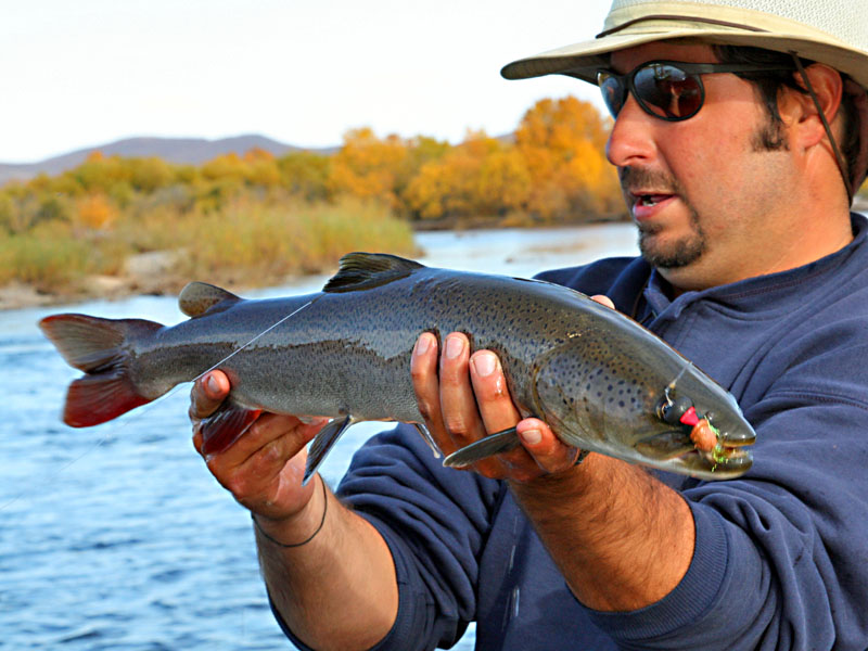Taimen fly fishing in mongolia with travel adventures for Taimen fishing mongolia